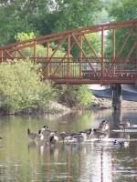 Photo of a bridge over water with geese swimming